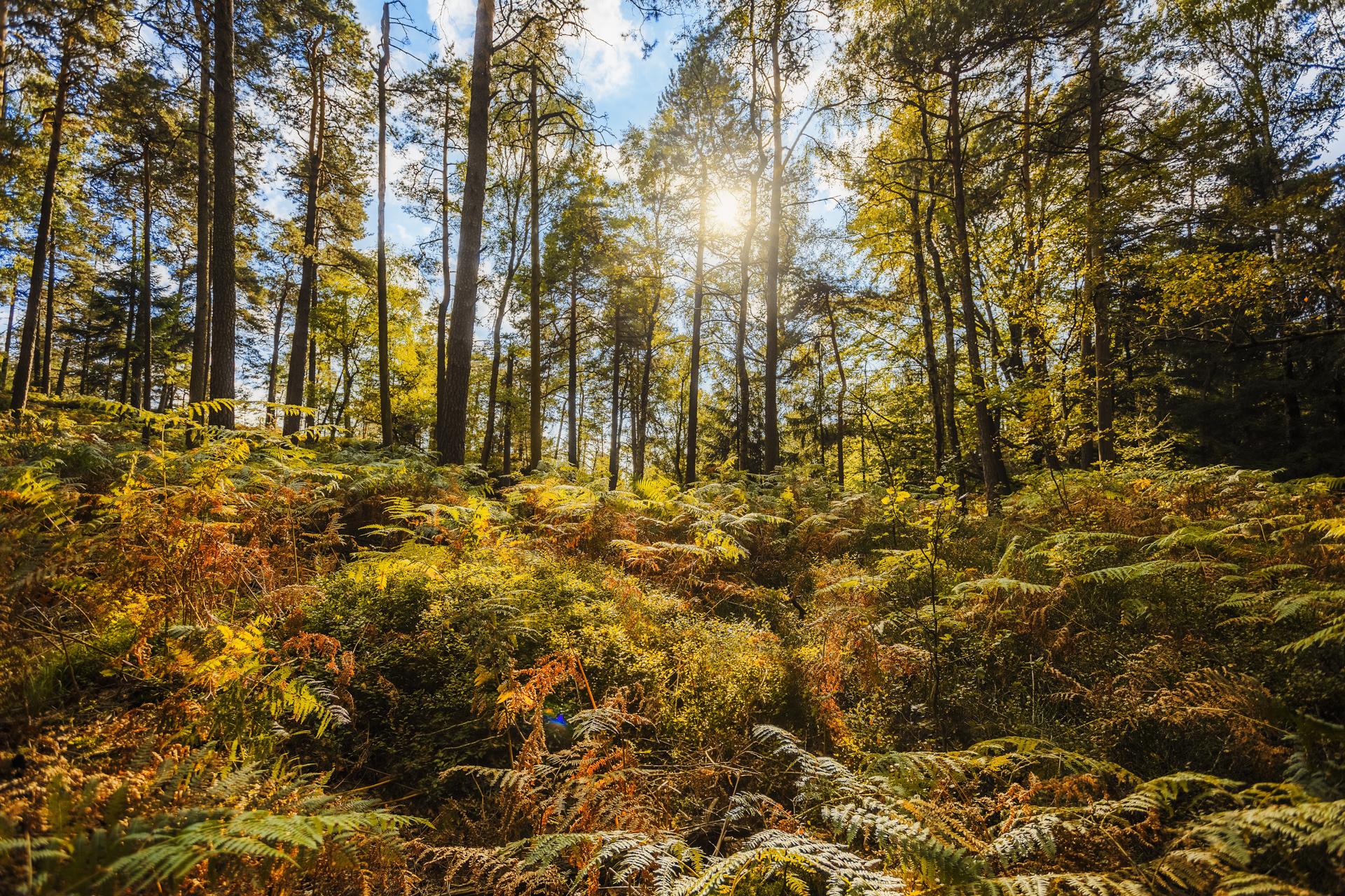 sächsische Schweiz September_Philip Gunkel Photographie_01